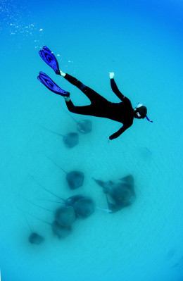 08-Diving-ray-copy