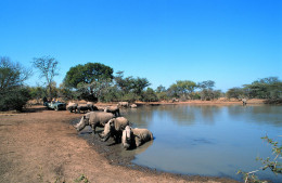 02-Waterhole-at-Mkhaya-copy